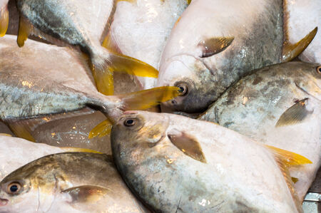 Frozen Pomfret Fish in the Seafood Market for sale photo