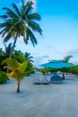 Palm trees, Blue colored sofa chair umbrella on Sand photo