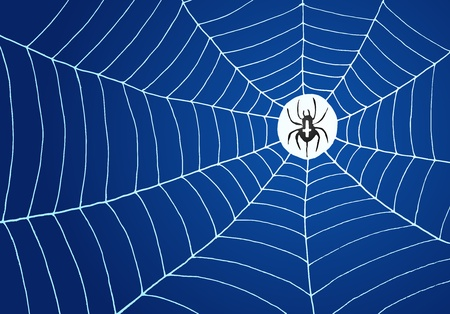 Spider and Net Illustration Vector