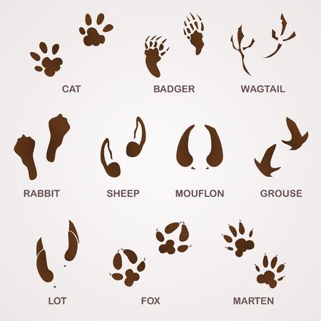 huellas de animales: Pistas de la fauna Vectores