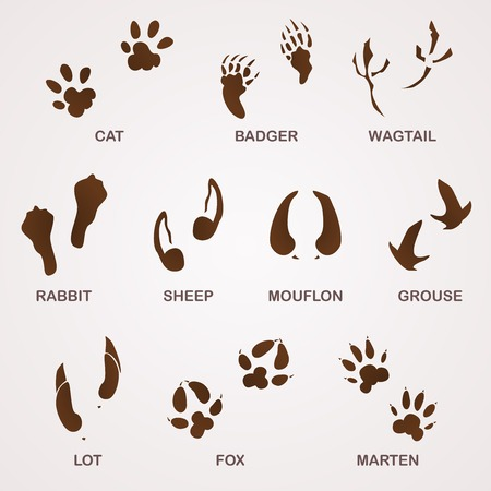 silhouette lapin: traces d'animaux Illustration