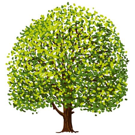 Dessin d'arbre Banque d'images - 22645333