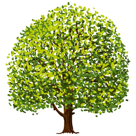 Tree Drawing Imagens - 22645333