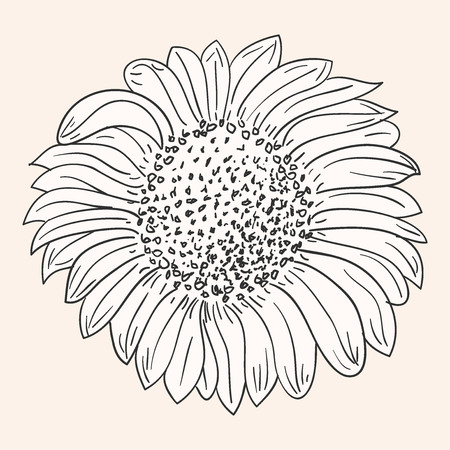 sunflower drawing royalty free cliparts vectors and stock