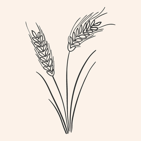 rye: Rye Ear Illustration