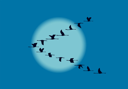 migrate: migrating birds in night Illustration