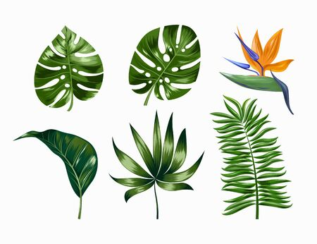 Vector tropische trendige Sommerpalmenblätter und -blumen, Dschungelblätter, geteiltes Blatt, Philodendronblätter einzeln auf weißem Hintergrund. EPS 10.