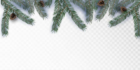 Green Merry Christmas Realistic fir tree branches with Pine cone on a transparent background. Vector illustration. Stock Illustratie