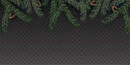 Green Merry Christmas Realistic fir tree branches with Pine cone on a dark transparent background. Vector illustration.