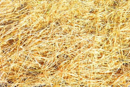 Dry yellow straw grass background texture Фото со стока
