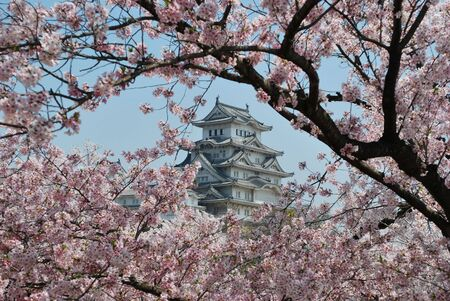 heritage protection: Himeji Castle during cherry blossom Editorial