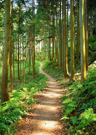 Trek tocht Trail in het bos Stockfoto