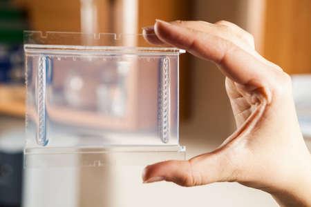 electrophoresis: Agarose gel plate for DNA separation via electrophoresis