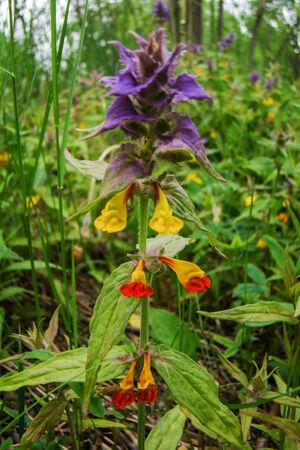 field of flower: beautiful colorful field flower on green background Archivio Fotografico