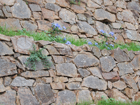 flowering plants: stone wall limestone with sprouted flowering plants