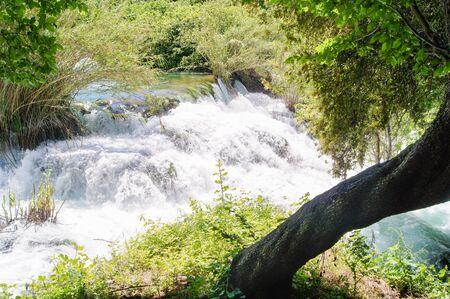 murmur: Screwed tree trunk on the banks of the water