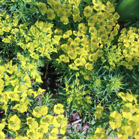 groundcover: groundcover
