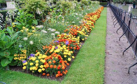 jardines con flores: caléndulas detrás de la cerca Foto de archivo