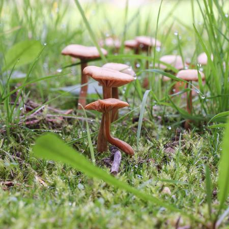 fragility: Mushroom under a leaf and acorn