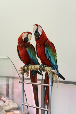 Parrots in the room.