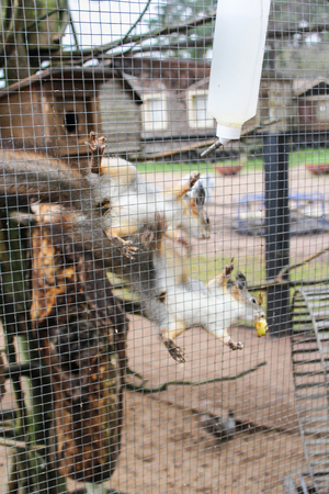 furry animals: Cage with furry animals.