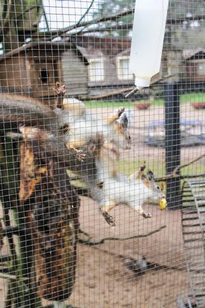 furry animals: Jaula con animales peludos.