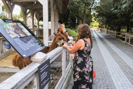 People feed alpacas. Zoo and animals on the territory of the hotel Yalta Intourist.