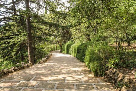 A hedge along the path. Lush vegetation of the Nikitsky Botanical Garden in the Crimea. Stock Photo