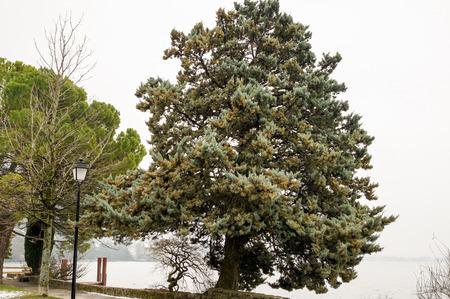Views and landscapes around Lake Geneva. 免版税图像