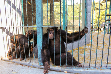 People and monkeys in the zoo hotel Yalta-Intourist. Stock Photo