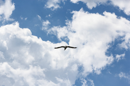 Sea gull in the sky against the background of clouds.
