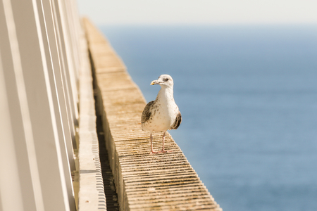 Sea gull on a concrete fence of balconies. Stock Photo - 121179677