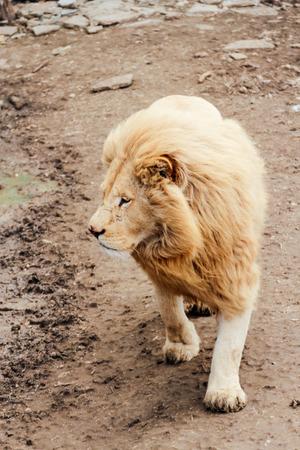 Predators of the Belogorsk Safari Taigan Park.