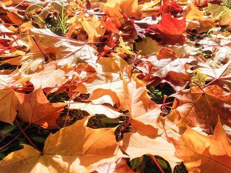 Natural background from natural plants. Reklamní fotografie - 133067367