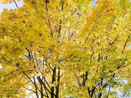 Natural background from natural plants. Reklamní fotografie