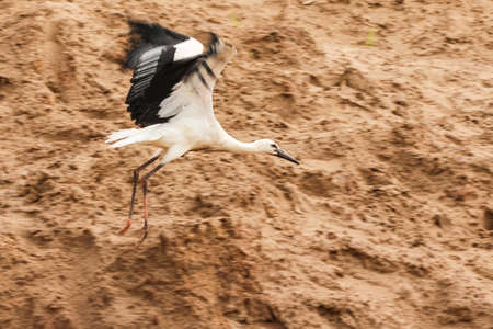 Storks in the wild.