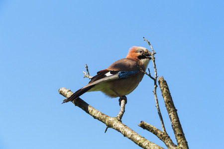 Singing spring bird on a dead tree in the garden - life goes on. Stock Photo