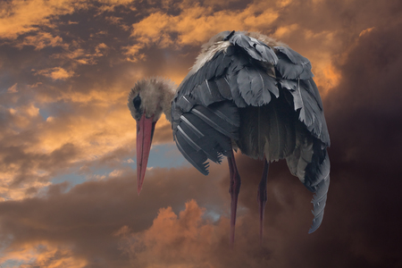 Mystic stork stands on the clouds and looks at the ground.