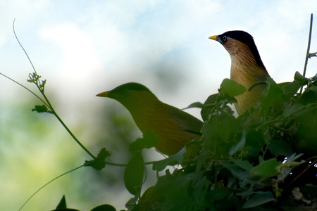 couple birds for wildlife photography and Cedar Waxwing perched on a branch.