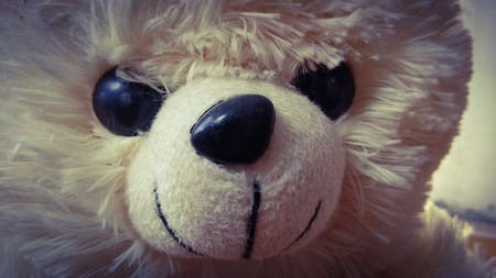 closeup teddy bear