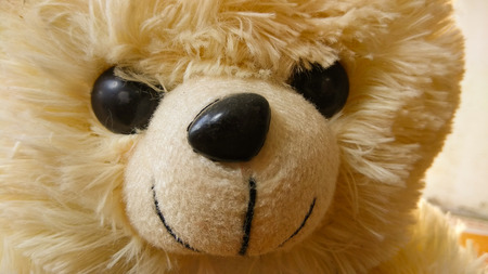 closeup crop teddy bear
