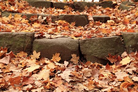 Fall foliage and maple leaves scattered on stone steps  Stock Photo