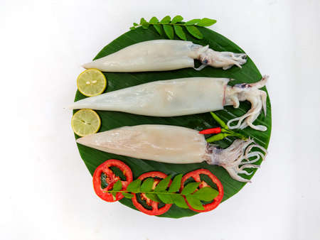 Close up view of fresh raw whole cleaned Loligo Squid (Loligo Duvauceli) decorated with curry leaves , tomato,lemon slice and herbs on a white Background,Selective Focus. Background.Selective Focus.