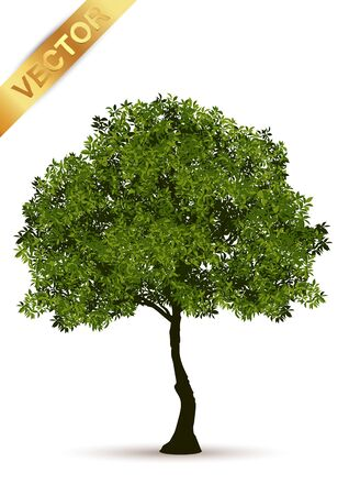 Realistic Trees Isolated on White Background