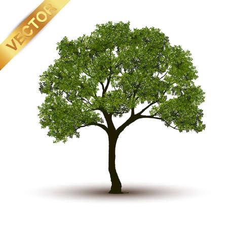 Schöner Baum realistisch auf einem weißen Hintergrund