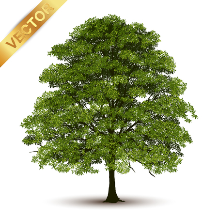 Beautiful tree Realistic  on a white background. Imagens - 99376903