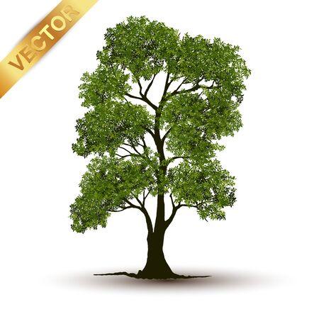 Beautiful tree Realistic on a white background. Ilustración de vector