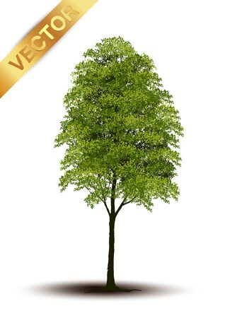 Beautiful tree Realistic  on a white background.