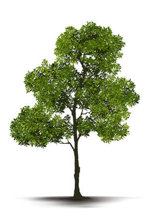 Illustration Realistic Tree Isolated on White Background - Vector