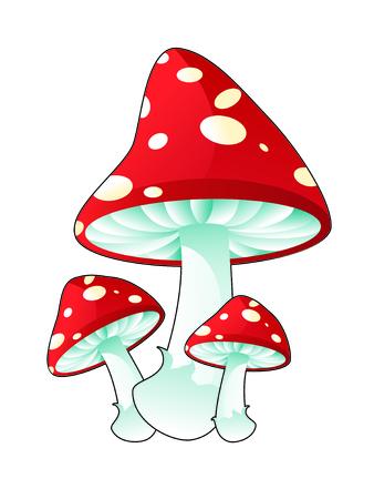 champignon magique: Champignons toxiques  Illustration